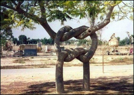 Knots in a tree